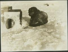 Thumbnail of Byrd Antarctic Expedition (1st: 1928-1930) : Photo Album 2