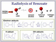 Thumbnail of TIME-RESOLVED RAMAN STUDIES OF THE ELECTRON ADDUCTS OF BENZOATE ANION IN WATER