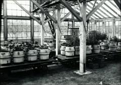Thumbnail of Botanical Hall, The Ohio State University: Interior view of greenhouse