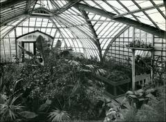 Thumbnail of Botanical Hall, The Ohio State University: Interior view of conservatory