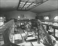 Thumbnail of Orton Hall, The Ohio State University: Interior view of specimens