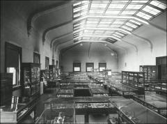 Thumbnail of Page Hall, The Ohio State University: Department of Archaeology specimen display