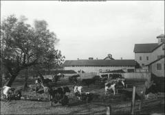 Thumbnail of Original Farm Barn Group, The Ohio State University: View ca. 1909