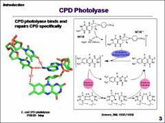 Thumbnail of DYNAMICS AND MECHANISM OF (6-4) PHOTOPRODUCT REPAIR IN DAMAGED DNA BY PHOTOLYASE