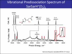Thumbnail of OBSERVATION OF SINGLE AND DOUBLE IONIC H-BONDS IN PROTONATED DIPEPTIDE IONS USING IR-IR DOUBLE RESONANCE SPECTROSCOPY
