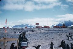 Thumbnail of Collecting data, Adelie penguin  rookery at Hallett Station (New Zealand and United States), Mts. Peacock (left) and Herschel in background