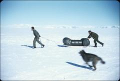 "Thumbnail of Navy men haul barrels of fuel at an auxiliary airbase near Beardmore Glacier while Husky dog ""Arrival"" frolics"