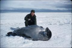 Thumbnail of Weddell seal checked by William J. Cromie