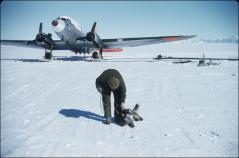 "Thumbnail of Aircraft, William J. Cromie, and dog ""Arrival"""