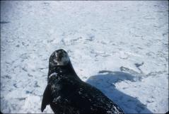 Thumbnail of Seal