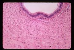 Thumbnail of Male reproductive system (OckHS-350)