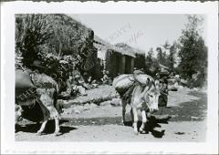 Thumbnail of Animals Loaded with Goods